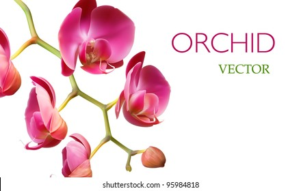 Brochure template design vector background, Orchid flower