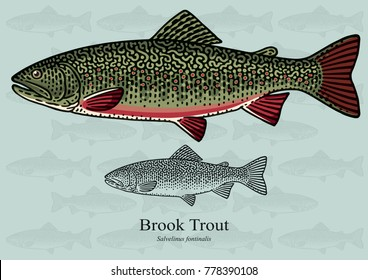 Brook Trout. Vector illustration with refined details and optimized stroke that allows the image to be used in small sizes (in packaging design, decoration, educational graphics, etc.)