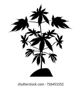 Broom marijuana silhouette isolated on white background