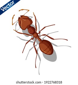 Brown ants vector illustration on white background. vector realistic insect illustration. Brown ants Insect lying on the floor symbol vector.