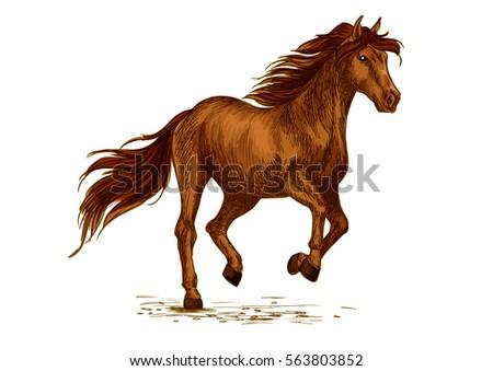 Brown Arabian Mustang Horse Running Racing Stock Vector Royalty