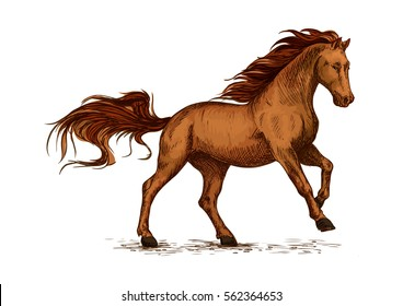 Brown arabian mustang stallion racing or galloping. Color horse vector sketch for equestrian sport, horse riding, equine design