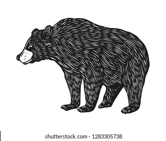 Brown bear hand drawn vector illustration. Animal cartoon style. Isolated on white background.