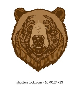 Brown bear head portrait vector illustration isolated on white background