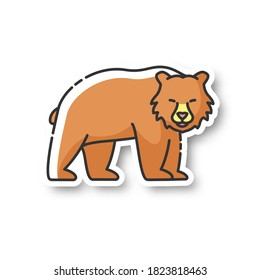 Brown bear patch. Large carnivore predator, dangerous woodland creature, forest inhabitant. Common nordic fauna RGB color printable sticker. Grizzly bear vector isolated illustration