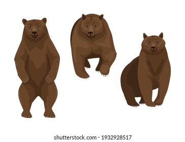 Brown bear, three different poses of a wild animal, forest predator. Sitting, standing and looking straight bear. Dangerous serious forest predator. Vector character illustration on a white background