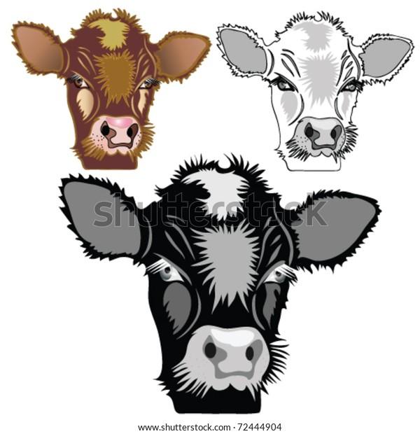 Brown, black, white calf heads. Domestic animal.