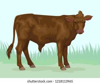 brown calf meat breed