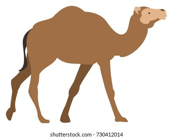 Brown Camel Walking