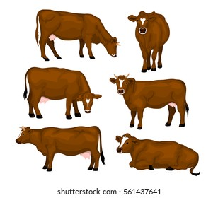 Brown cattle set. Cows standing, lying, eating, grazing, side and front view