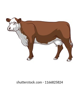 Brown Cow on white background. Cow vector.