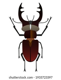 Brown deer bug with detailed wings and horns. Brown stag beetle. Entomological illustration.