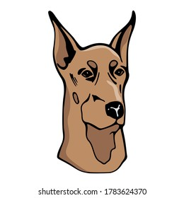 Brown Dobie Or Doberman Dog Cute Pet Animal Vector Design Illustration