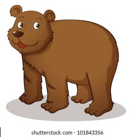 Brown grizzly on white background