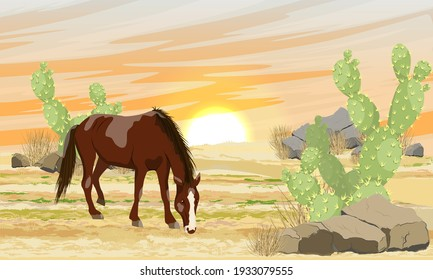 Brown horse in the desert at sunset. Sand, stones and thickets of Opuntia cactus. Realistic vector landscape.