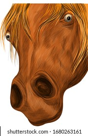 brown horse face portrait of a funny vector illustration