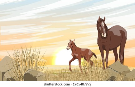 A brown horse with a white spot and its foal are walking along a desert rocky area with stones and dry grass. Sunset in the steppe. Equus ferus caballus. Realistic vector landscape.