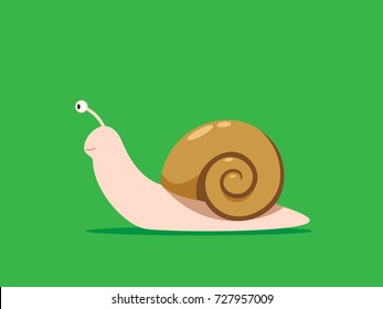 Brown House Snail on the green background