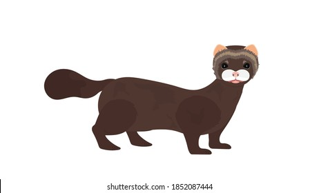 Brown mink. Mink in a flat style. Isolated, vector.