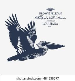 Brown Pelican, Wildlife of America, illustration, vector, blue color