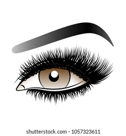 Brown woman eye with long false lashes with eyebrows.Vector illustration isolated on white background. Ink drawing. Eye makeup.