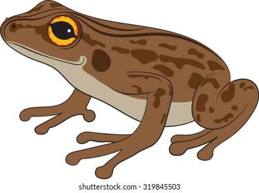 Brown-Frog-Vector-Illustration