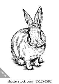 brush painting ink draw isolated rabbit illustration