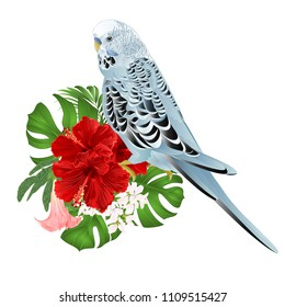 Budgerigar, home pet ,blue pet parakeet  on a bouquet with tropical flowers hibiscus, palm,philodendron  and   Brugmansia on a white background vintage vector illustration editable hand draw