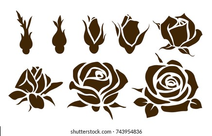 Buds and flowers. Vector rose silhouette. Stages of flowering