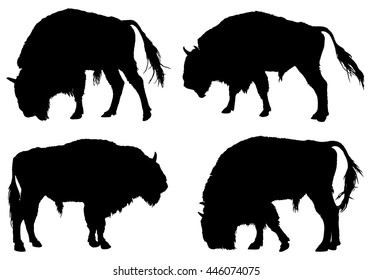 Buffalo. American Bison silhouette collection
