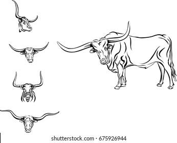 buffalo, bull, head, horns, vector, picture, longhorn