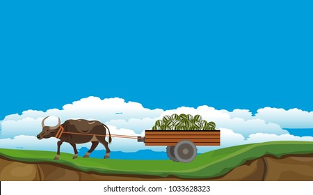 Buffalo drags a cart with watermelons,vector countryside village scene