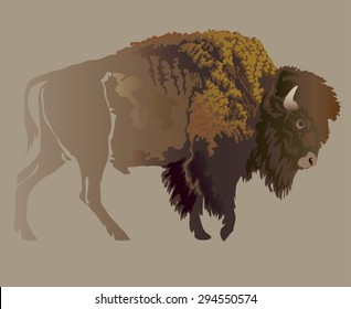 Buffalo. Hand-drawn illustration, detailed variant.