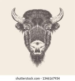 Buffalo Head Illustration vector in hand drawn design.