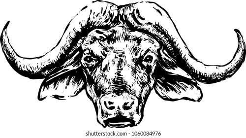 Buffalo head on a white background. Black and white drawing by hand. Vector image.