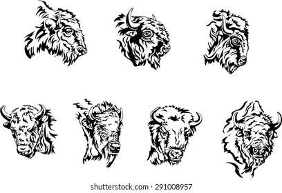buffalo head, portrait