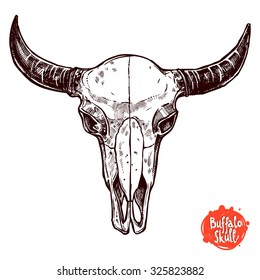 Buffalo Skull Hand Drawn Sketch