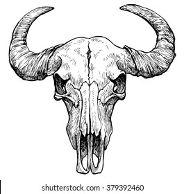 Buffalo skull- hand drawn vector illustration, isolated on white