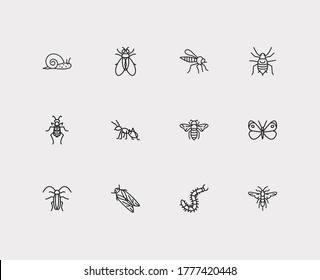 Bug icons set. Cabbage butterfly and bug icons with ant, bumblebee and tiger beetle. Set of farm for web app logo UI design.