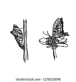 Bug illustration / Hand drawn insect sketch
