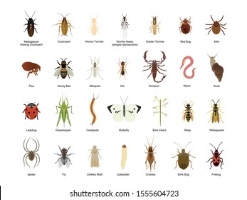 Bug of insect vector cartoon set icon.Vector illustration insect beetle. Isolated cartoon icon bug and fly beetle.