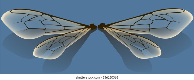 bug wing vector image