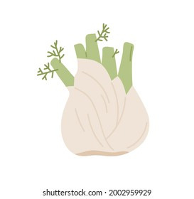 Bulb-like fennel root with leaves. Icon of green organic vegetable. Fresh raw aromatic finocchio plant. Colored flat vector illustration of healthy food isolated on white background