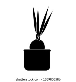 Bulbous houseplants, potted bulb flower silhouette, potted flower icon vector illustration