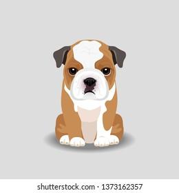 Bull Dog Puppy Vector Illustration. Dog isolated
