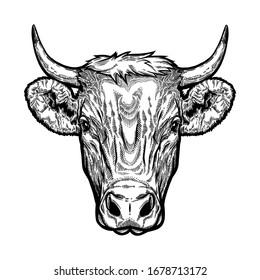 Bull head engraving vector illustration. Vector shirt, tattoo and sticker design