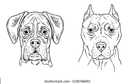 Bull terrier and boxer vector