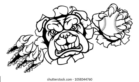 A bulldog angry animal sports mascot holding a baseball ball and breaking through the background with its claws