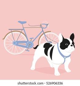 Bulldog with a bike on the walk