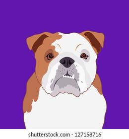 Bulldog, The buddy dog